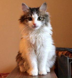 Котенок Шарлиз в добрые руки