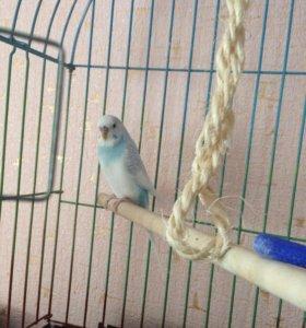 попугай девочка+ клетка