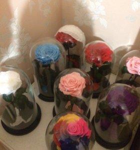 Это долговечная живая роза под куполом из стекла