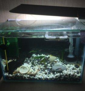 Срочно продам 2 аквариума на 9 и 4 л + подарок