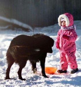 Если есть ребенок, то эти 2 собаки