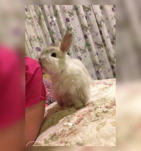 В добрые руки кролика