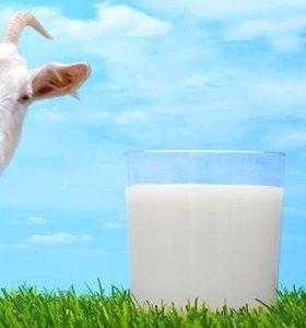 Вкусное, домашнее козье молоко