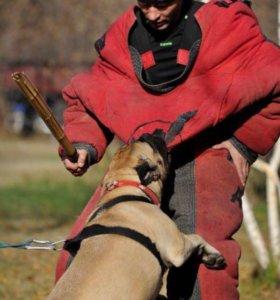 Дрессировка собак в Домодедово