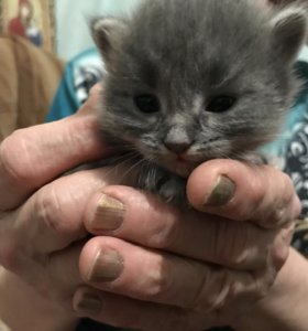 Котята родились 28 января