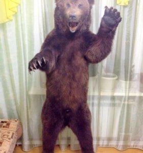 Чучело байкальского медведя