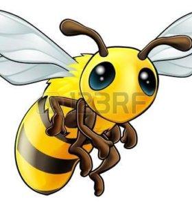 продаётся пасека без пчёл