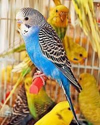 Папугаи