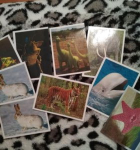 Наклейки мир удивительных животных