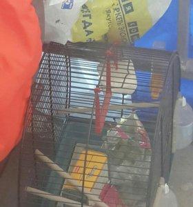 Клетка для попугая б/у забирать в жатае