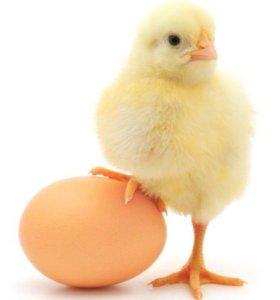 Продам Утку, Муларда, Перепела. Яйца