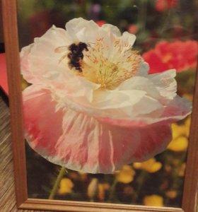 Фото-картина в деревянной рамке со стеклом