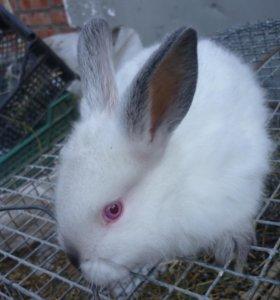 Кролики 1,5 -3 месяца