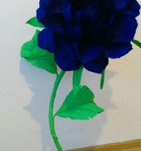 Декоративная роза в горшке