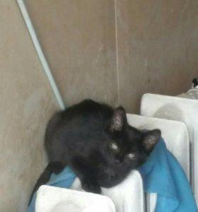 Черный котенок 6 мес. В добрые руки.