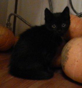 Кошечка трехмесячная и двухмесячные котята.