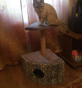 Домик для котиков!