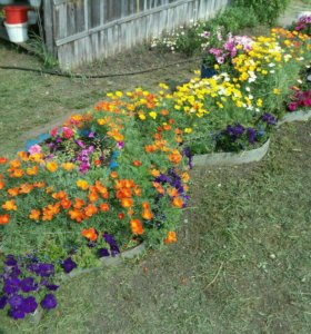 Рассада: цветы, овощи