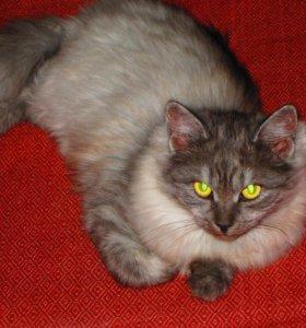 кошка-мышеловка