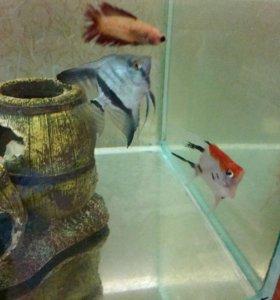 продам набор рыб
