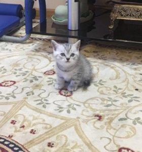 Котята!
