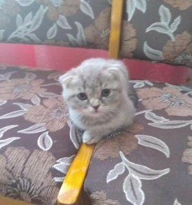 красивая кошечка 2,5 месяца