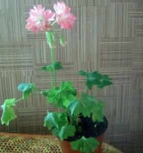 Цветы. Партизанск