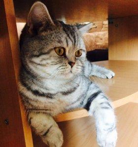 Михаил кот для вязки