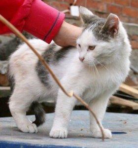 Кошка Белочка
