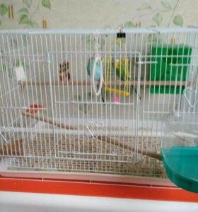 Большая клетка с попугаями(пара)