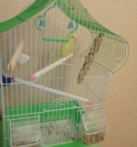 Волнистый попугай вместе с клеткой срочно