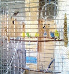Большая клетка для разведения попугаев