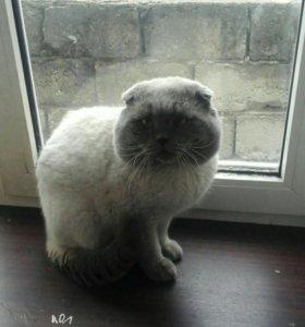 Вязка ,обалденный кот
