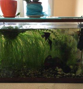 аквариум 54 литра