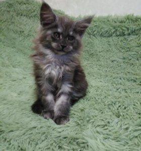 Котенок-кошечка