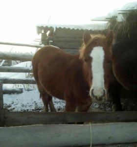 Продам молодую лошадь.