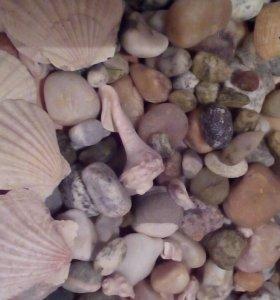 Ракушки и камни для аквариума