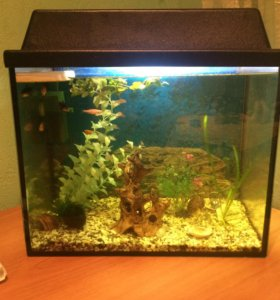 Аквариум, фильтр, рыбы, водоросли, коряга