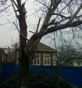 Деревья на дрова бесплатно