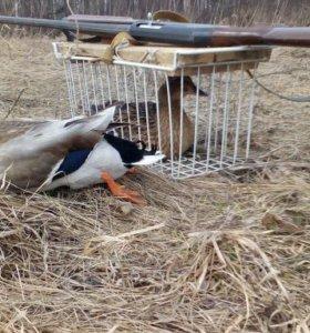Подсадные Кряквы и Селезни для весенней охоты