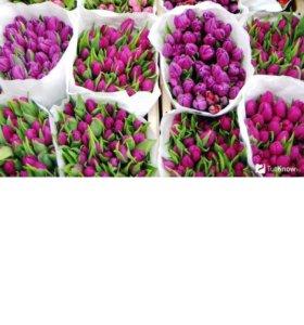 Цветы! Тюльпаны