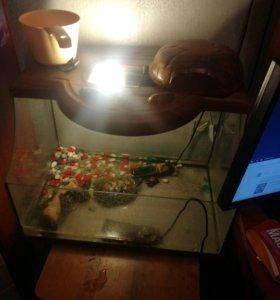Аквариум для черепах