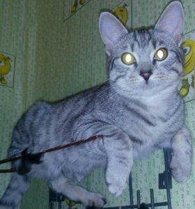 Котик Тайсон