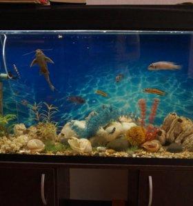Аквариум 150л с рыбками