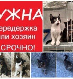 Котята , срочно нужна помощь