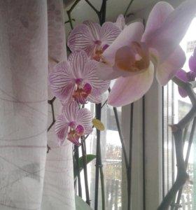 Комнатные цветы.