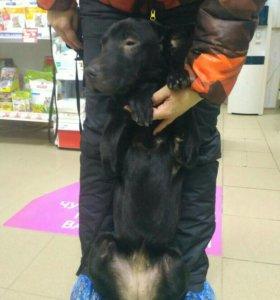 Отдам собаку в добрые и заботливые руки