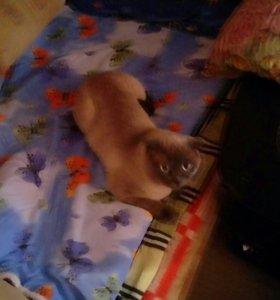 Котик ищет кошечку