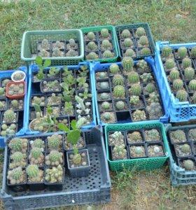 Продам комнатные растения и кактусы