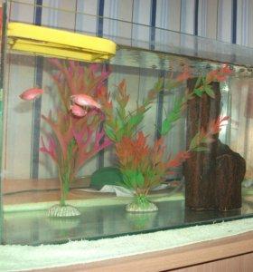 Рыбки с аквариумом.